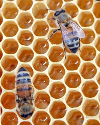 Projection/débat: la dette humaine (demain, l'abeille): Pourquoi,comment ?