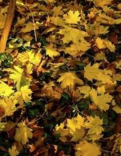 Atelier feuilles d'automne